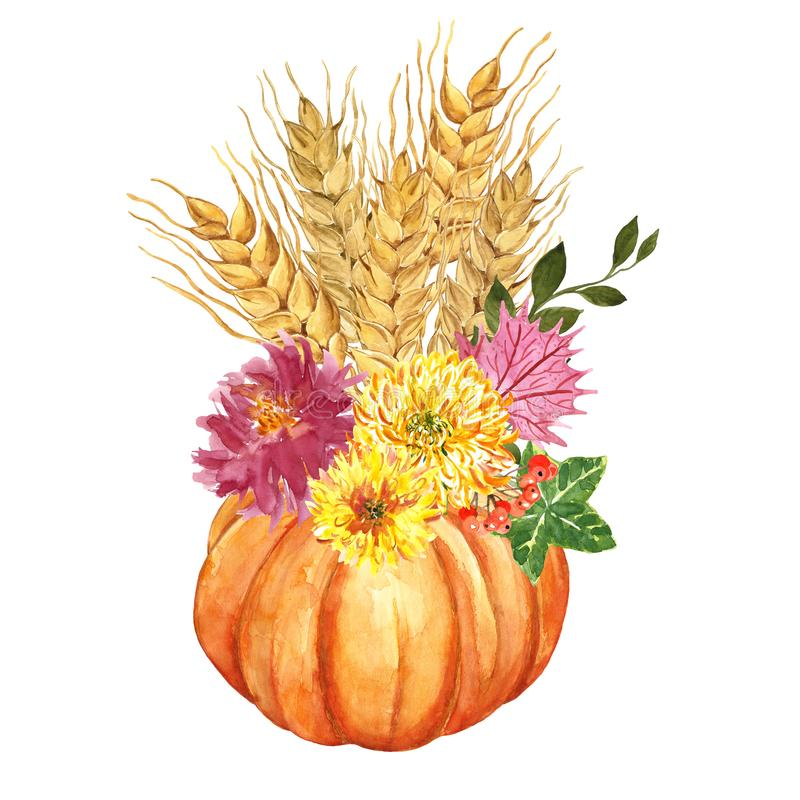 Watercolor orange pumpkin, yellow mums flowers, wheat sheaf, leaves, red berries. Autumn holiday decorating stock illustration