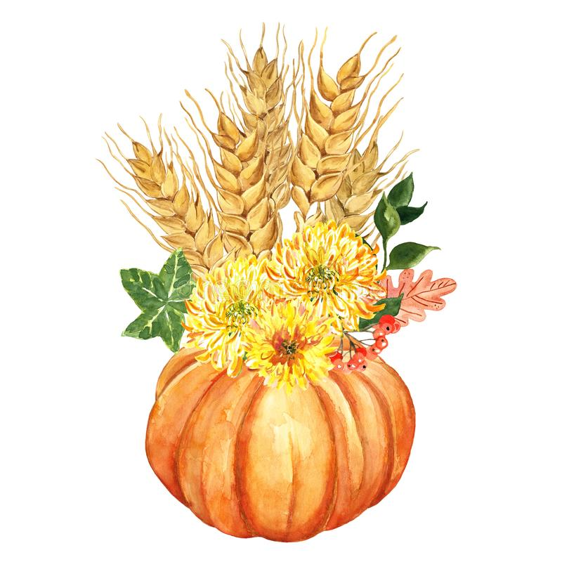 Watercolor orange pumpkin and yellow mums flowers, wheat sheaf, leaves, red berries. Autumn Thanksgiving holiday decor royalty free illustration