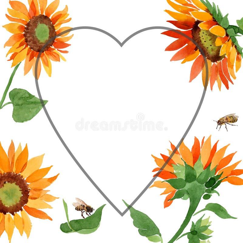 Watercolor orange sunflower flower. Floral botanical flower. Frame border ornament square. Aquarelle wildflower for background, texture, wrapper pattern, frame stock images