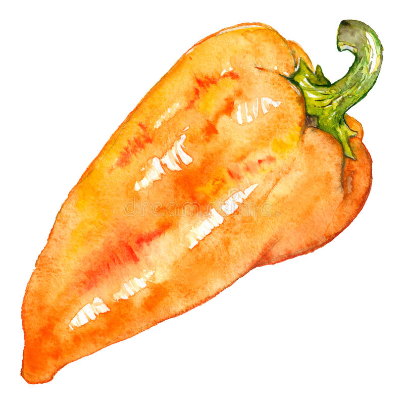 Watercolor orange yellow sweet bell Bulgarian pepper vegetable isolated.  royalty free illustration