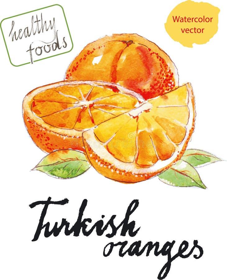 Watercolor oranges. Watercolor hand drawn oranges - vector Illustration stock illustration