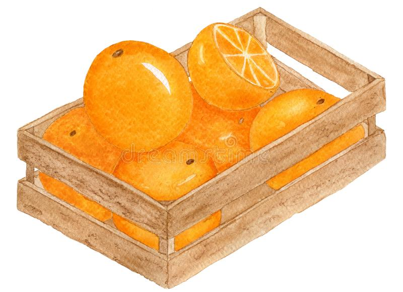 Watercolor oranges royalty free illustration