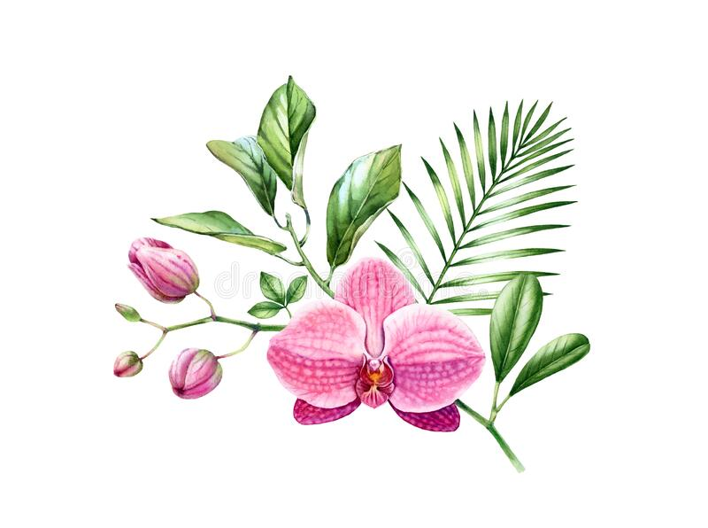 Watercolor Orchid bouquet. Branch of exotic pink flower in blossom. Floral arrangement with palm leaves. Colourful. Tropical plants isolated on white. Botanical royalty free illustration