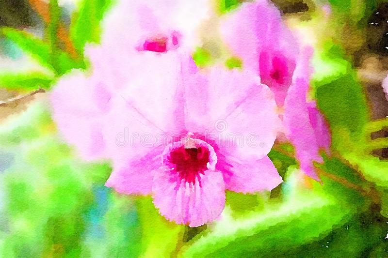 Watercolor of orchid flower background royalty free illustration