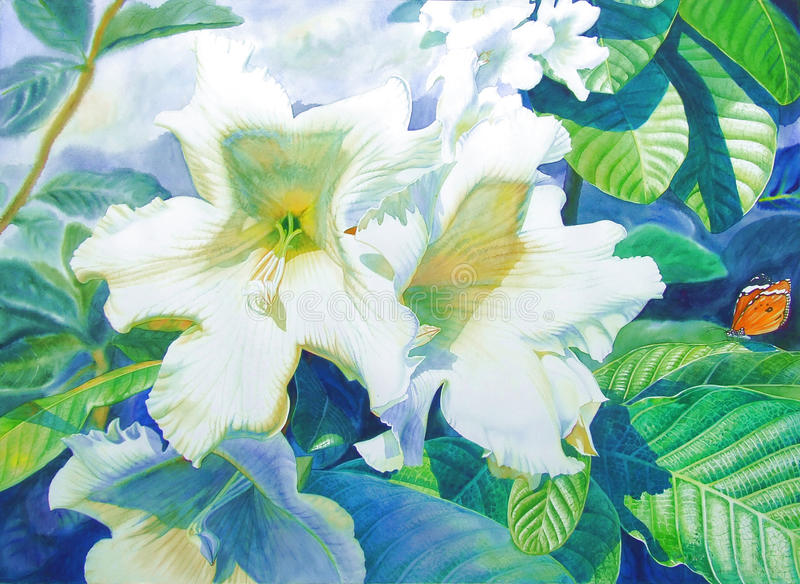 Watercolor original realistic painting white color of herald trumpet flower stock illustration