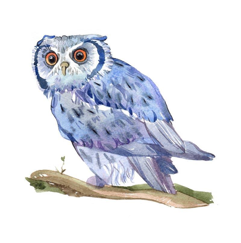 Watercolor owl bird isolated stock illustration