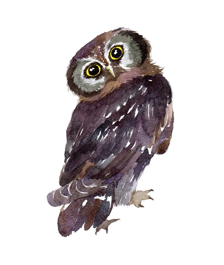Watercolor owl bird isolated vector illustration