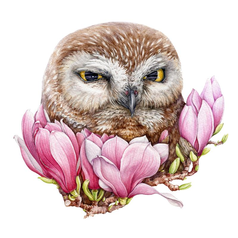 Watercolor owl in pink magnolia flowers illustration. Hand drawn wild bird, surrounded by spring blossoms on the tree. Isolated on white background royalty free illustration