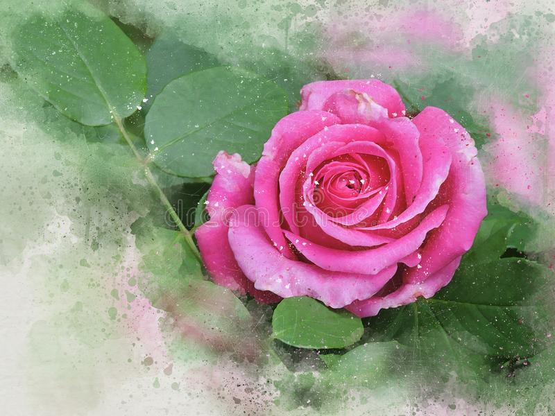 Watercolor painted beautiful pink rose. In a green garden with paper background royalty free illustration