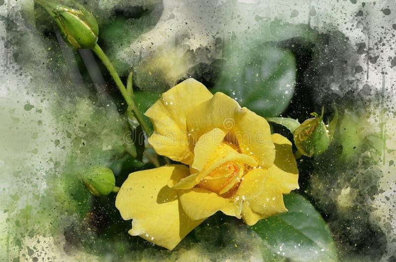 Watercolor painted beautiful yellow rose royalty free stock photo