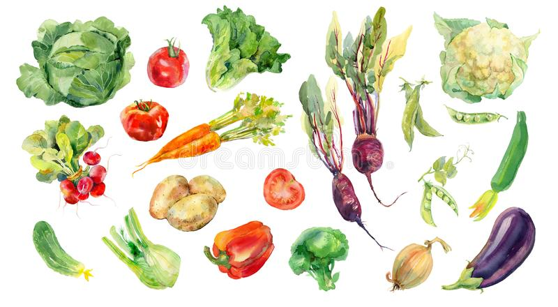 Watercolor painted collection of vegetables. Fresh colorful veggies background royalty free illustration