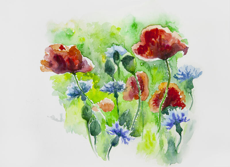 Watercolor painted flowers, poppies and cornflowers royalty free stock photos