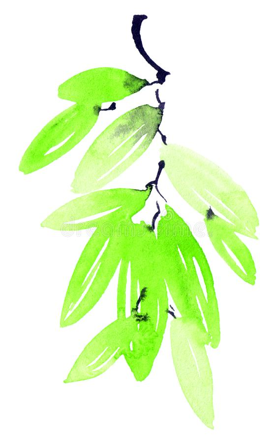 Watercolor painted green tree leaves. Watercolor and ink illustration of green tree leaves in decorative style royalty free stock image