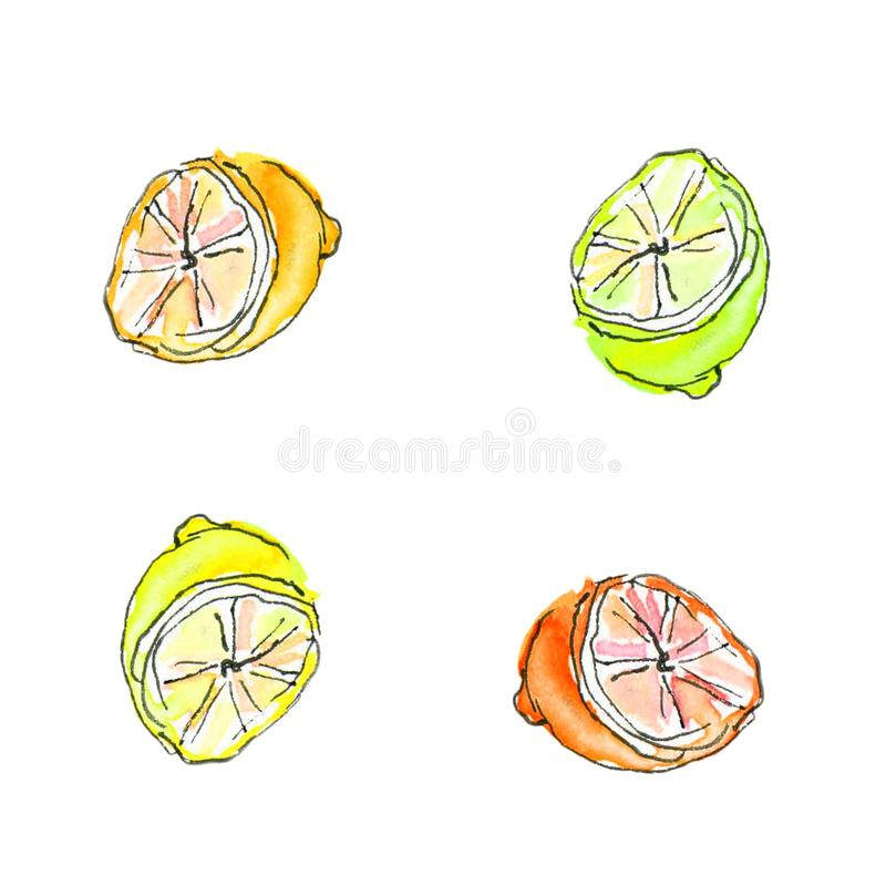 Watercolor painted set of lime. Hand drawn food design elements isolated on white background vector illustration