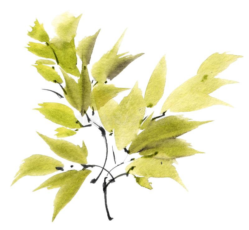 Watercolor painted tree leaves. Watercolor and ink illustration of tree branch with leaves in style sumi-e, u-sin. Oriental traditional painting. Background for stock image