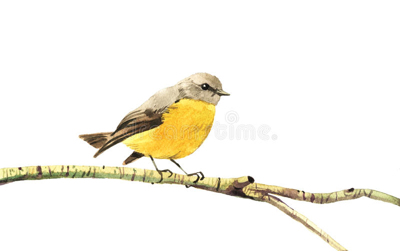 Watercolor painted yellow bird stock photo