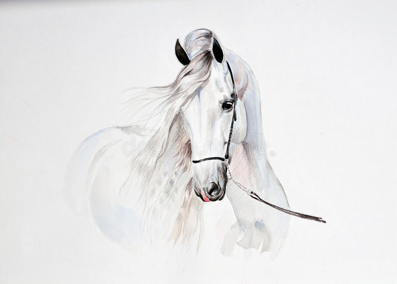 Watercolor painting of andalusian horse portrait royalty free illustration