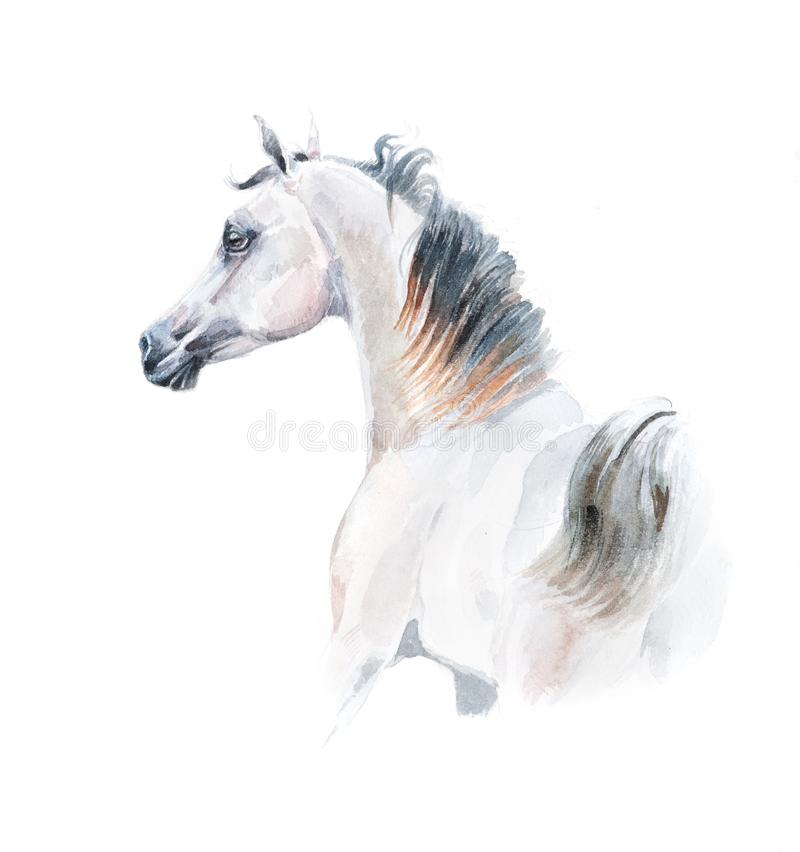 Watercolor painting of arabian horse vector illustration