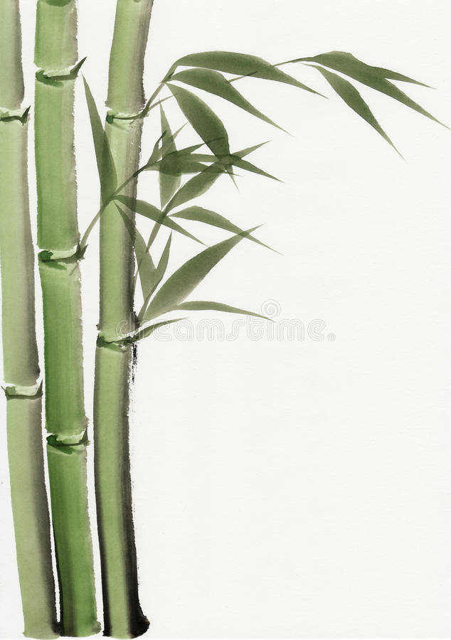 Watercolor painting of bamboo vector illustration
