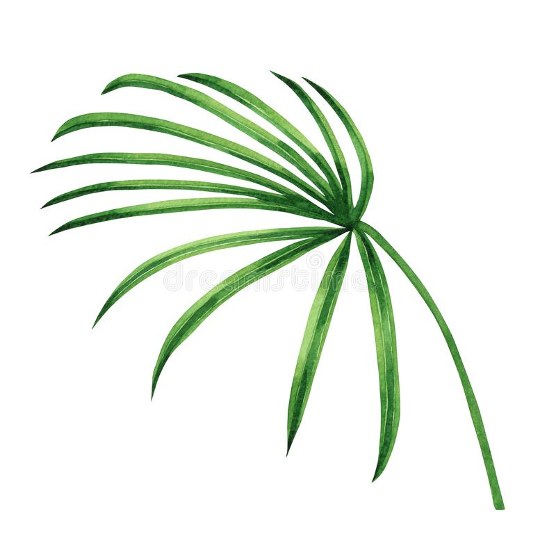 Watercolor painting coconut, palm leaf,green leaves isolated on white background.Watercolor hand painted illustration tropical exo. Tic leaf for wallpaper royalty free illustration