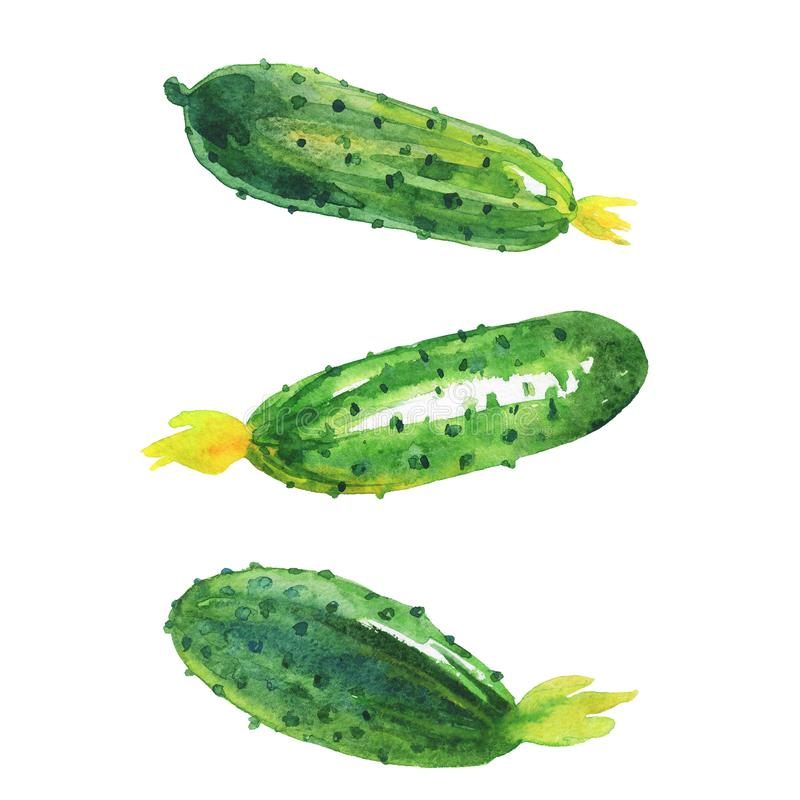 Watercolor cucumbers set royalty free illustration