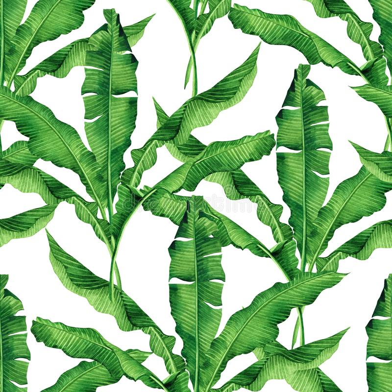 Watercolor painting green leaves isolated on white background.Watercolor hand painted illustration palm,banana leave tropical exot. Ic leaf for wallpaper vintage royalty free illustration