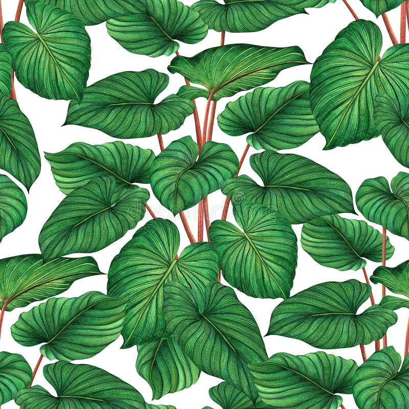 Watercolor painting green leaves,palm leaf seamless pattern on white background.Watercolor hand drawn illustration tropical,aloha stock illustration