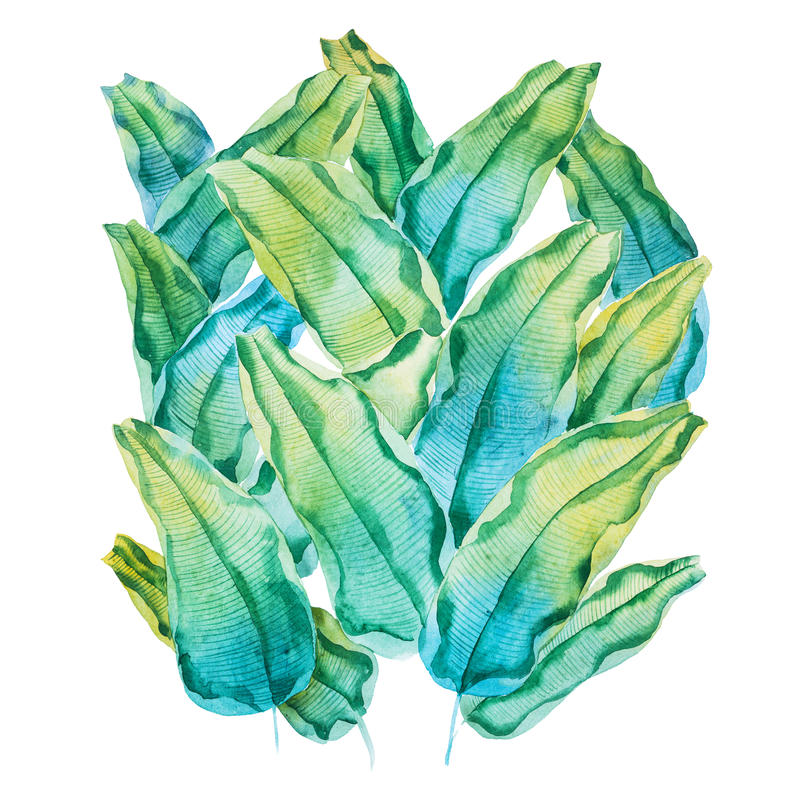 Watercolor painting of green tropical leaves. Hand-made pattern of waringin Ficus benjamina drawn on white paper royalty free illustration