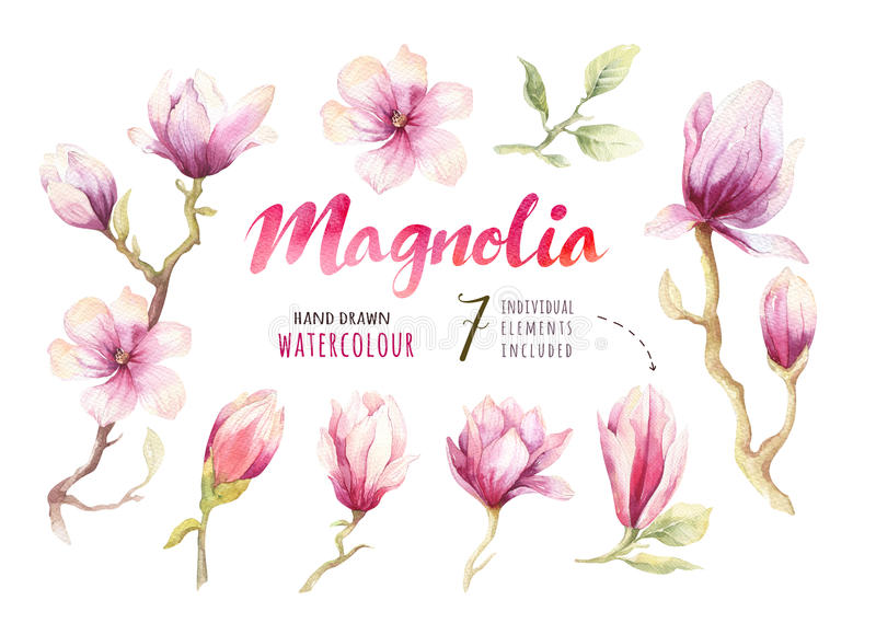 Watercolor Painting Magnolia blossom flower wallpaper decoration stock illustration