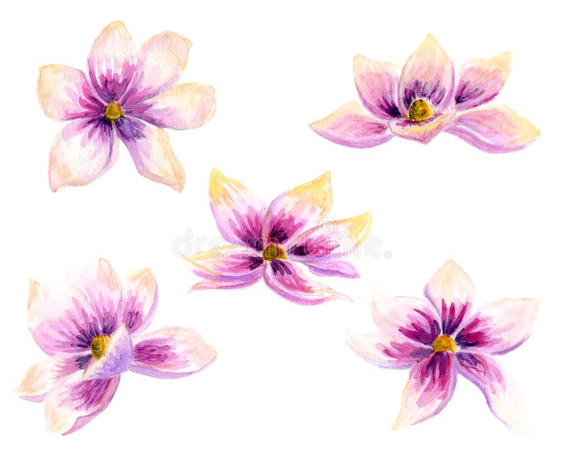 Watercolor Painting Magnolia blossom flower wallpaper decoration art. Hand drawn isolated closeup tree floral illustration. Decora vector illustration