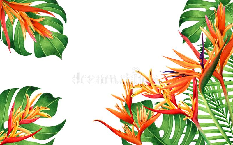 Watercolor painting monstera,green leave,bird of paradise blooming flowers background.Watercolor hand drawn illustration tropical stock illustration
