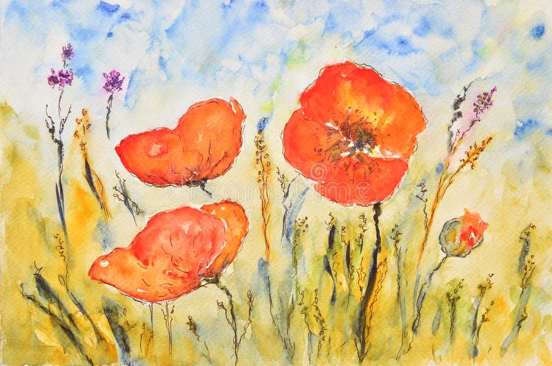 Watercolor painting, poppies royalty free illustration