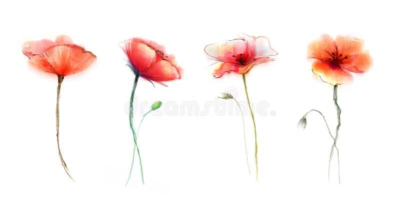 Watercolor painting poppy flower vector illustration