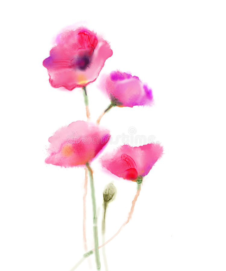 Watercolor painting poppy flower. Isolated flowers on white paper background vector illustration