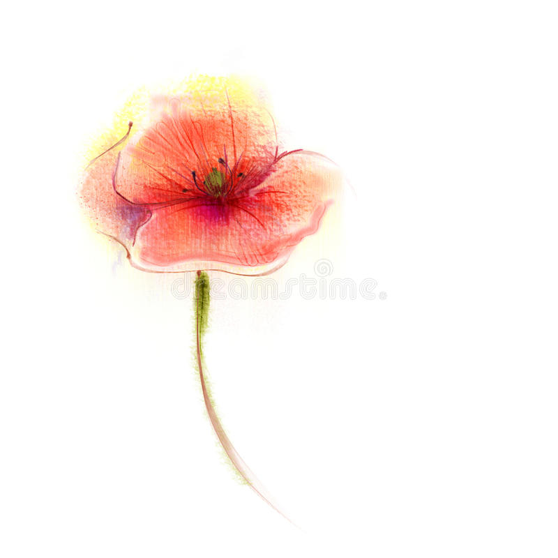 Watercolor painting poppy flower isolated flowers on white paper download watercolor painting poppy flower isolated flowers on white paper background stock illustration illustration mightylinksfo