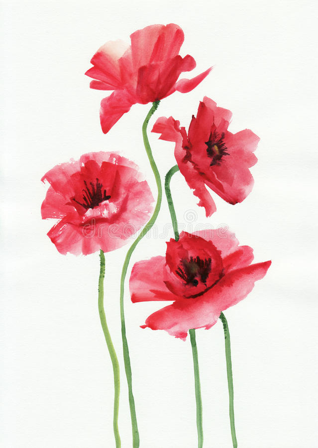 Watercolor painting of red poppies vector illustration