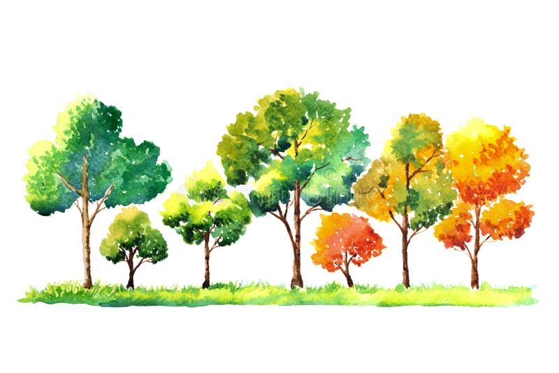 Watercolor painting trees on white paper isolated background stock illustration