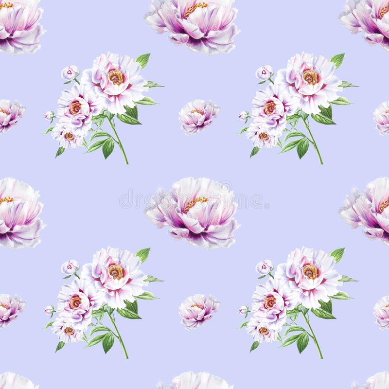 Beautiful white peony seamless pattern. Bouquet of flowers. Floral texture. Marker drawing. royalty free illustration