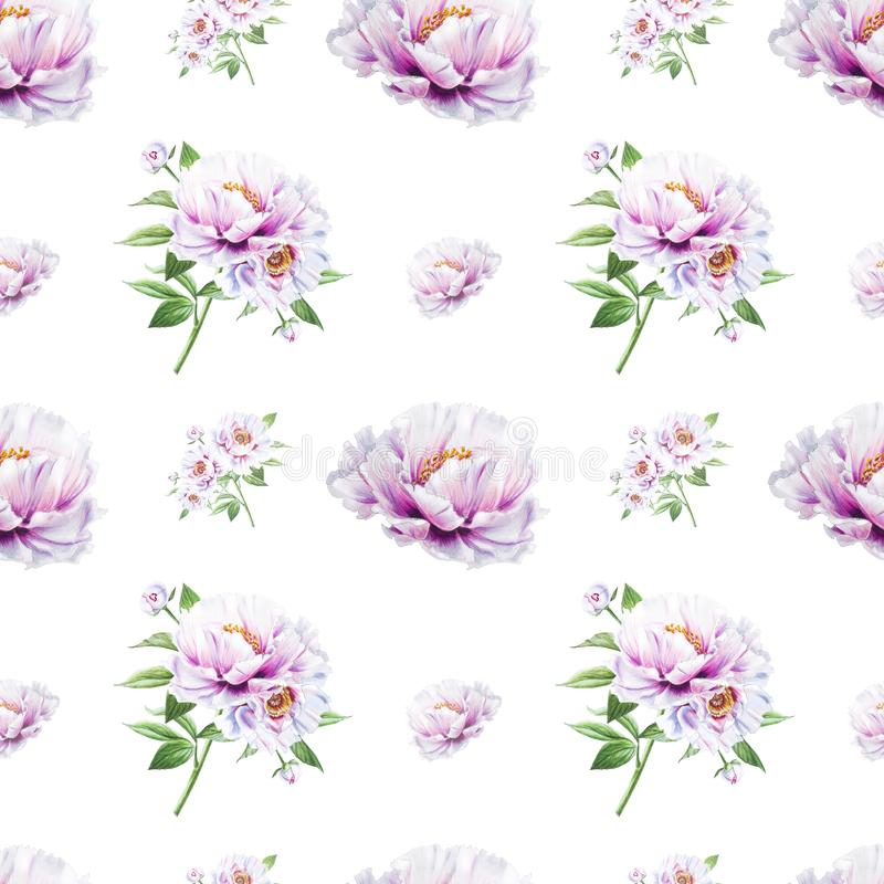 Beautiful white peony seamless pattern. Bouquet of flowers. Floral texture. Marker drawing. stock illustration