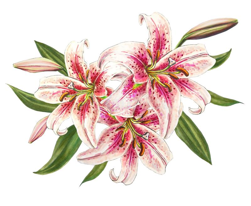 Beautiful pink lilies. Bouquet of flowers. Floral print. Marker drawing. vector illustration