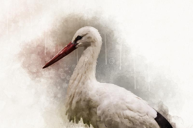 Watercolor painting of a white Stork. Bird illustration stock image