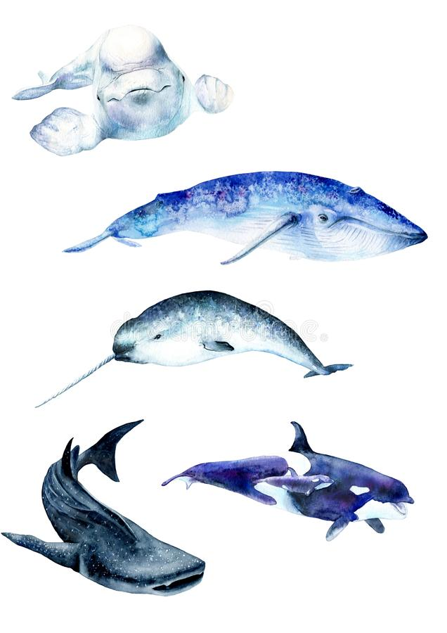 Watercolor paintings poster. Whale animals: narwhal, blue whale, beluga whale shark, sketch. Watercolor paintings poster. Whale animals: narwhal, blue whale royalty free illustration