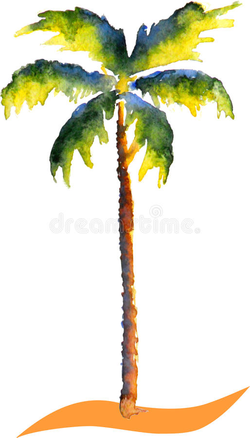 Watercolor Palm tree. Picture, aquarell scetch, vector illustration royalty free illustration