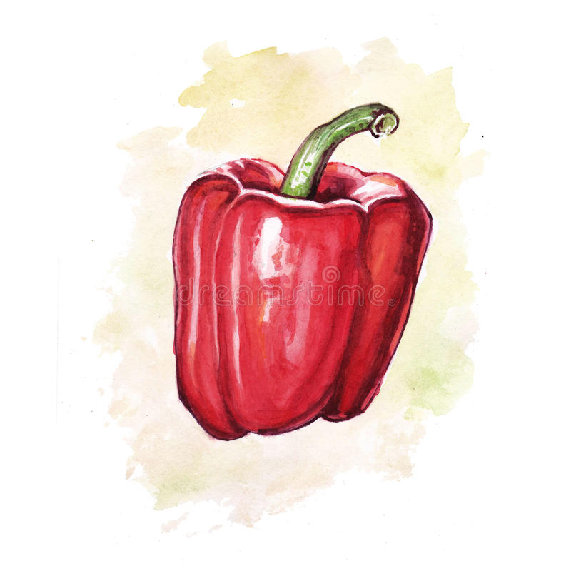 Watercolor paprika with colored spot royalty free illustration