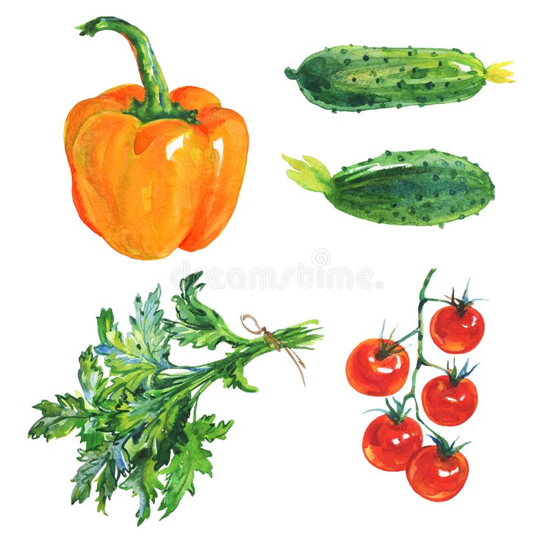 Watercolor paprika, cucumbers, parsley, tomatoes vector illustration