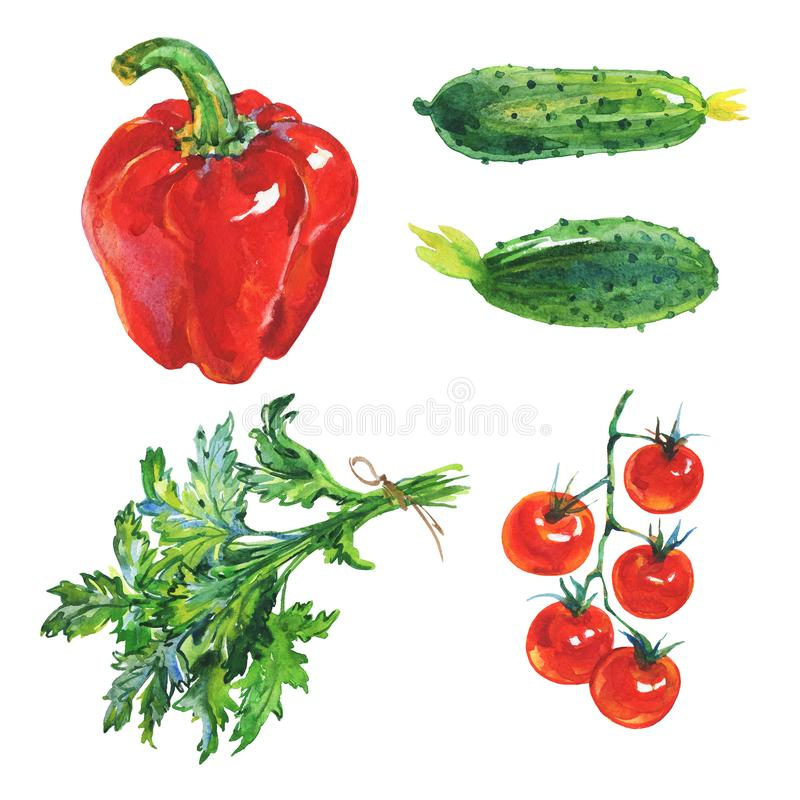 Watercolor paprika, cucumbers, parsley, tomatoes royalty free illustration