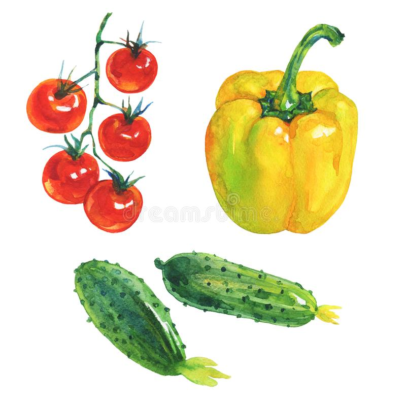 Watercolor paprika pepper, cucumbers, cherry tomatoes royalty free illustration