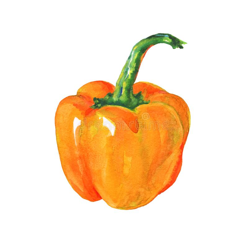 Watercolor paprika pepper vector illustration