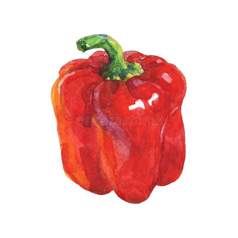 Watercolor paprika pepper stock illustration