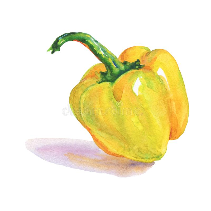 Watercolor paprika pepper royalty free illustration